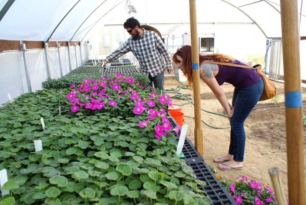 The greenhouse is the latest addition to City's urban farm.