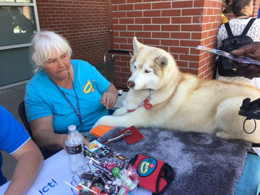 Therapy dog sitting on table at Heath and Wellness Expo